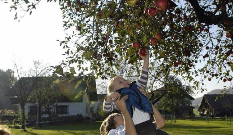 Frisches Obst vom Baum (© Unteres Feld)