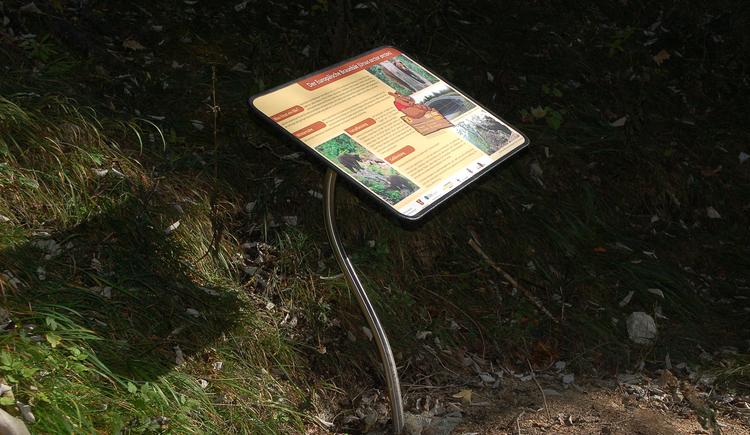 Schautafeln entlang des Bärenwegs (© Tourismusverband Faistenau)
