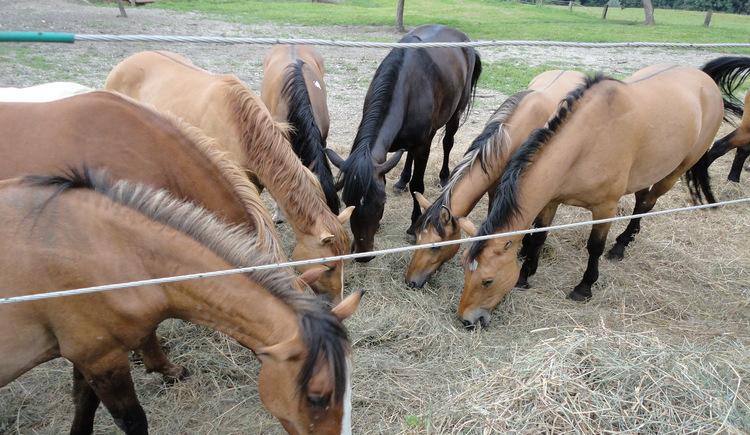 sun.horse.ranch.höhnhart.JPG
