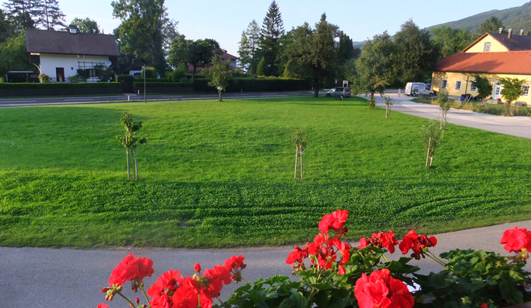 Balkonblumen grüne Wiese rechts Häuser. (© Familie Oberschmid)