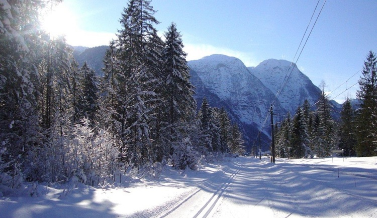 The best prepared cross country skiing trail leads through the forest. (© Peter Perstl)