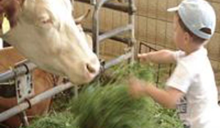 Kühe liefern beste Heumilch, Joghurt, u.v.m. (© kloiber)
