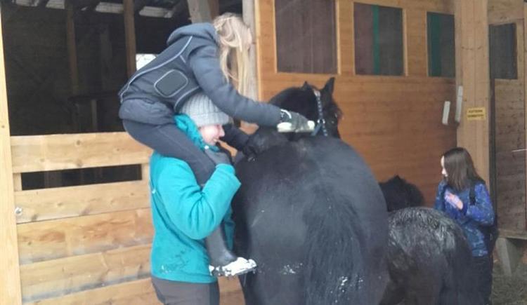 Pferdepflege (© Andrea Hasenöhrl)