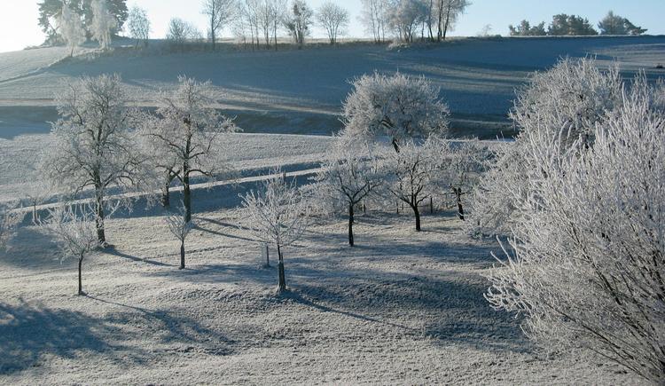 Raureif-bedeckte Landschaft Mühlviertler Alm