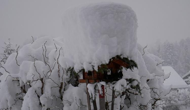 Im Winter hat die verschneite Landschaft der Ferienregion Dachstein Salzkammergut einen besonderen Reiz. (© Helga Hummelbrunner)