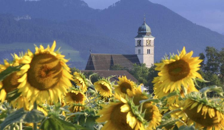 Sonnenblumenfeld in Pettenbach (© Marktgemeinde Pettenbach)