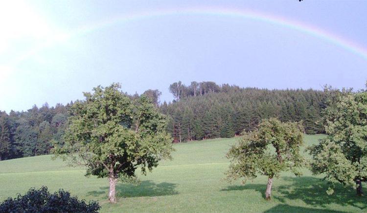 Aussicht auf die Landschaft mit Bäumen, im Hintergrund ein Regenbogen