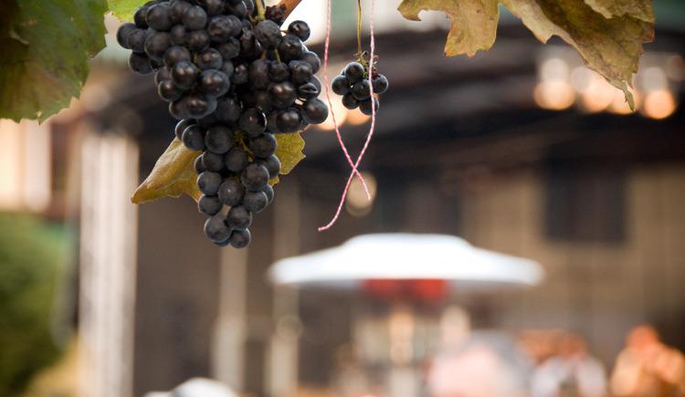 Wein und Kastanien. (© Erich Unteredelsbacher)