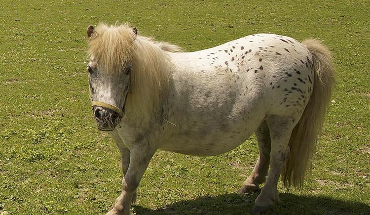 Obermayrgut Pony Dinja