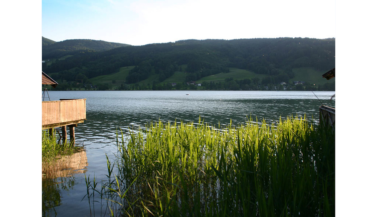 View to lake with reeds, in the background the landscape
