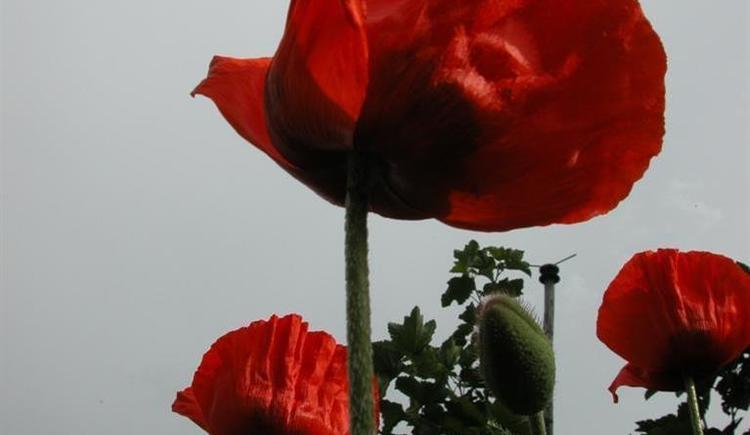 Blumen (© Privat)