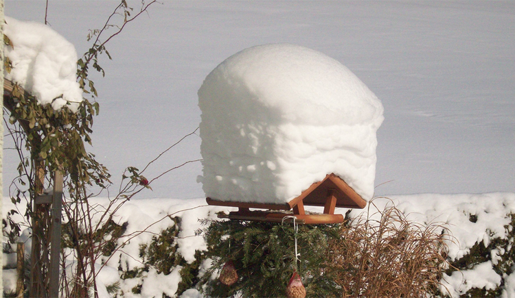 Snowy bird house, hedges / shrubs covered in snow