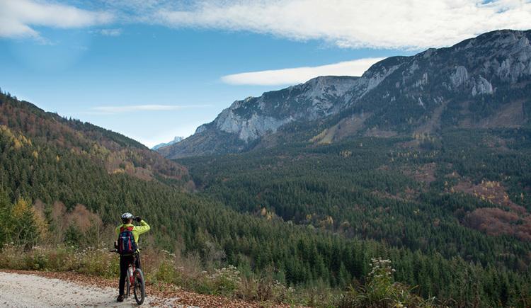 Mountainbikefahrer auf Forststraße vor Bergkulisse