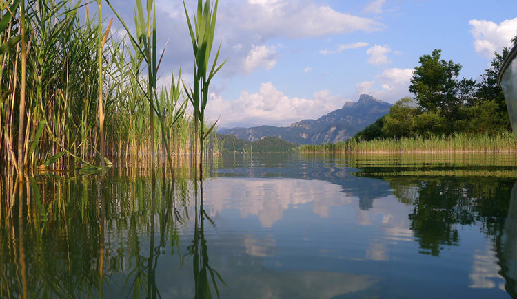 The lake surrounded by the reeds, the mountains in the background