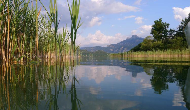 Der See umgeben vom Schilf, im Hintergrund die Berge. (© Hemetsberger)
