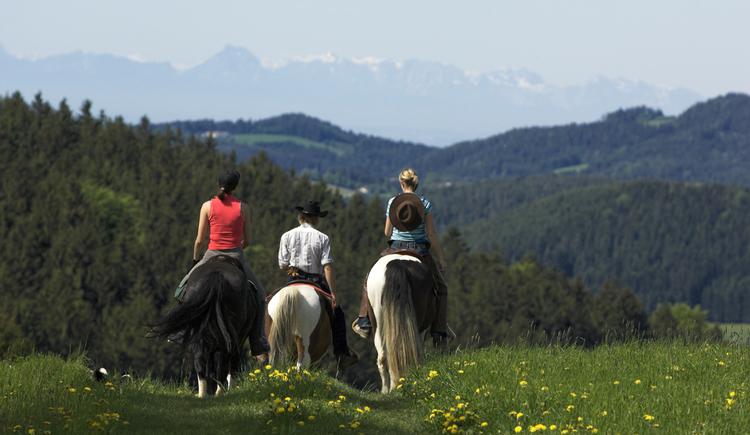 Reiten im Pferdereich Mühlviertler Alm. (© ©OÖ.Tourismus/Erber)