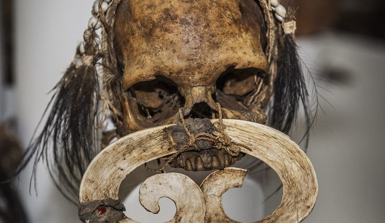 Verzierter Schädel der Asmat, Symbol der Kopfjagd und des Ahnenkultes