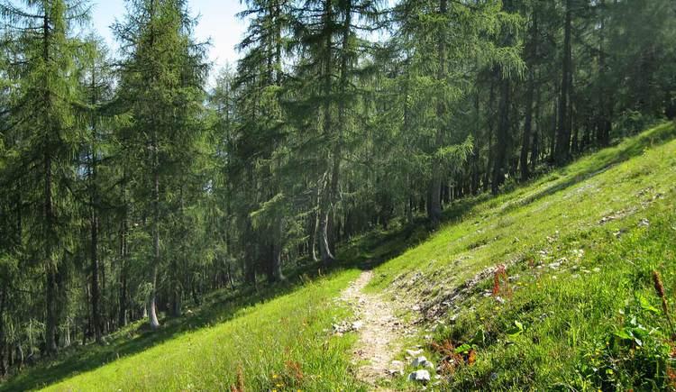 Hutterer Almen-Runde (RundWanderWelt Hinterstoder) (© Gemeinde Hinterstoder)