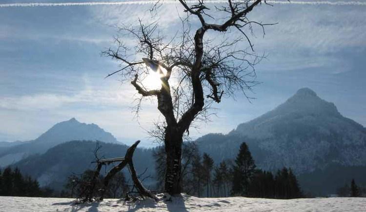 Winterwanderweg Vitz am See. (© WTG)