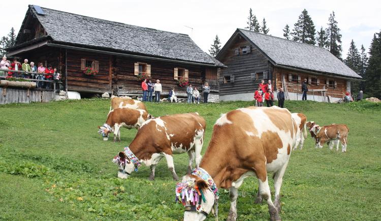 Almabtrieb, ein uralter Brauchtum wird heute noch gelebt und gefeiert. Die Kühe stehen geschmückt vor der Leutgebalm. (© Grill Elisabeth)