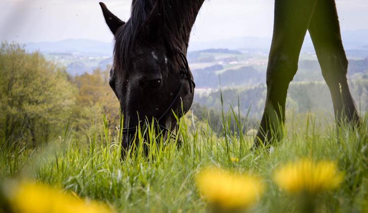 Pferd (© Kristina Gould)