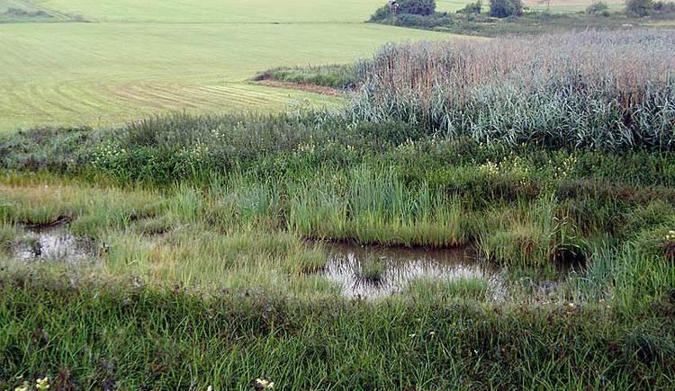 Feuchtwiese im Naturschutzgebiet Koaserin nahe des Sauwaldes.