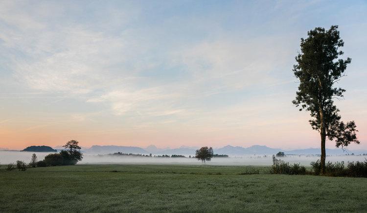 Morgenstimmung im Ibmer Moor. (© Oberösterreich Tourismus GmbH/Robert Maybach)