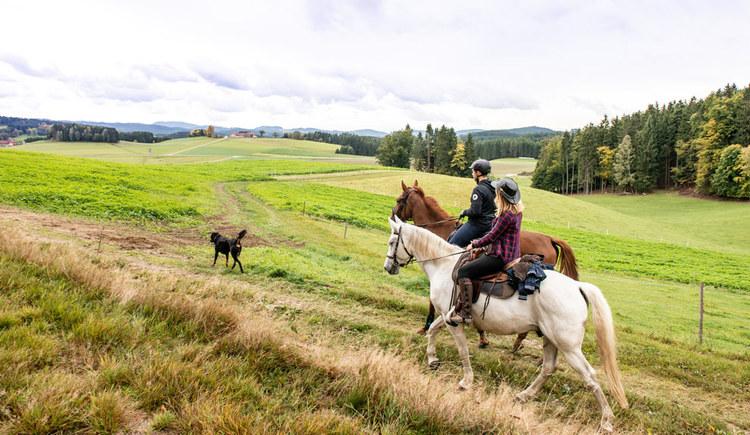 Wanderreiten im Pferdereich Mühlviertler Alm (© Pferdereich Mühlviertler Alm-Erber)