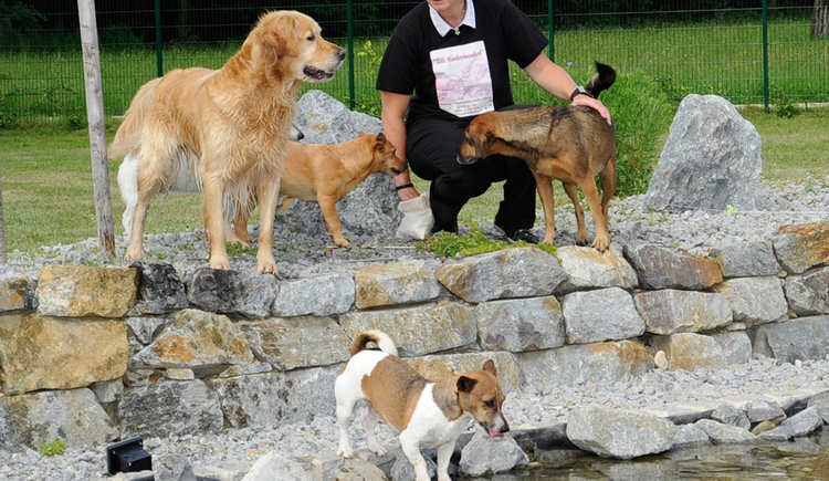 Gästehaus Zeller in Mining - Hunde im Garten mit Naturbiotop