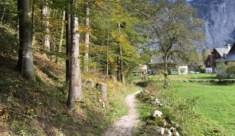 The last part of the hiking trail leads along the edge of the forest behind the houses of the village of Reith in Obertraun. (© Ferienregion Dachstein Salzkammergut)