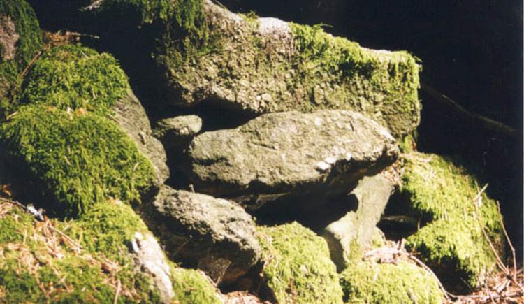 Steine im Wald (© Gemeindeamt Auberg)