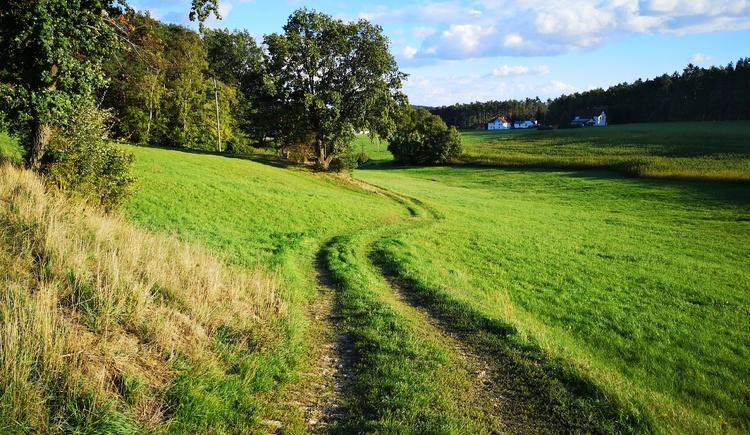 Weg in Heinberg (© Tanja Mittermair)