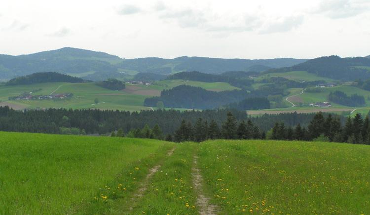 Auf dem Saubergerweg mit seinen Weitblicken um die Bezirkshauptstadt Rohrbach-Berg wandern.
