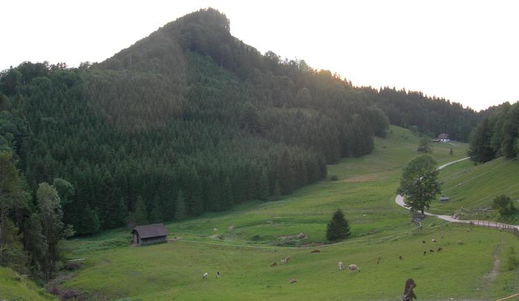 Hochsteinalm (© Oberösterreich Tourismus / green-solutions)