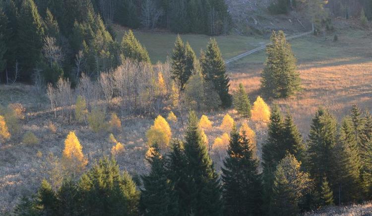 Herbst (© werner mair)