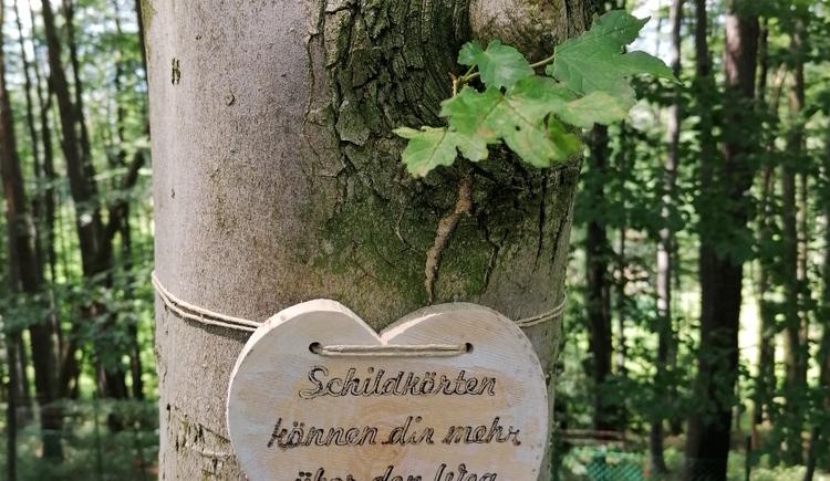 Wanderweg der Herzen (14) (© NMS Traundorf)