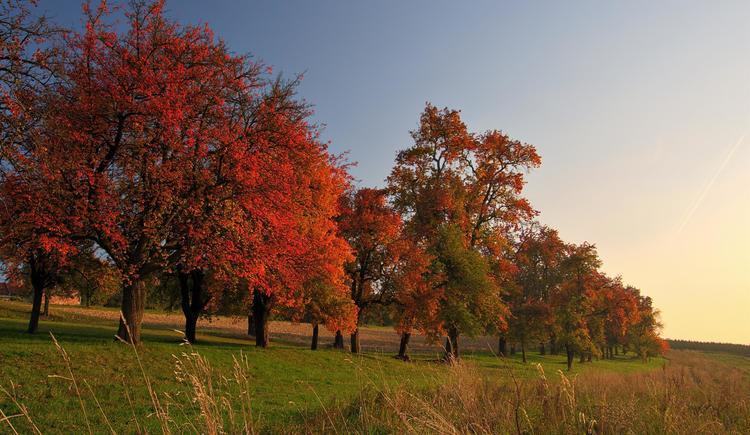 Streuobstwiese im Naturpark (© Martin Rumersdorfer)