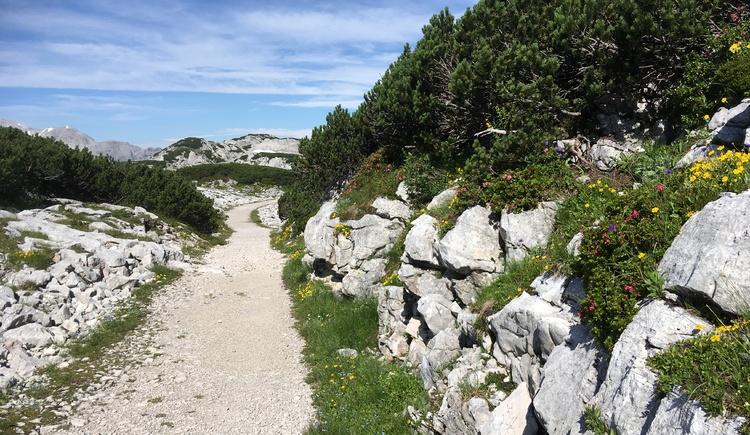 Am Wegesrand findet man die typische Pflanzenvielfalt vor. (© Ferienregion Dachstein Salzkammergut)