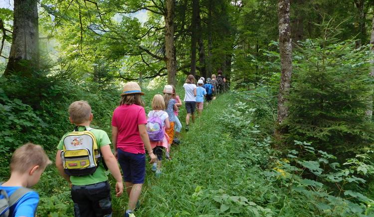 Waldpädagogik (© Prenninger)