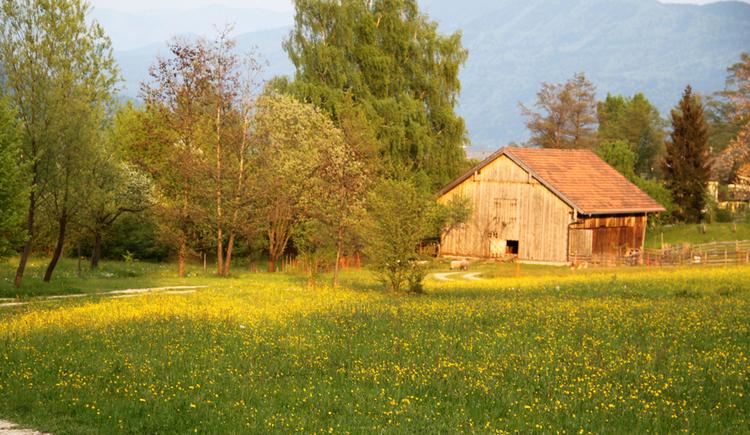 Wiese mit Bäumen, im Hintergrund eine alte Scheune