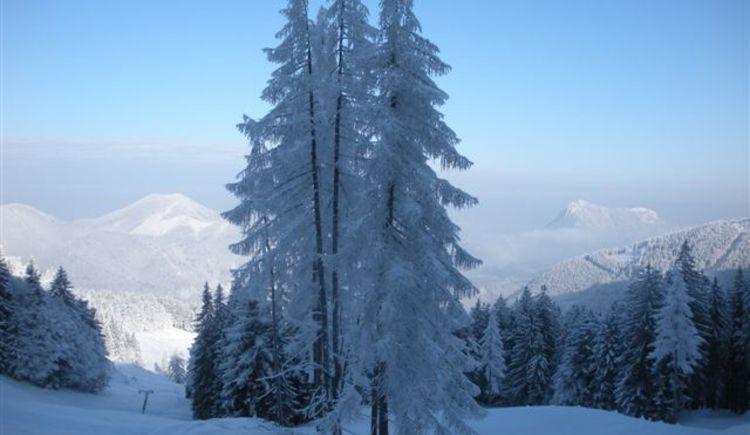 Winter landscape at alpine pasture Mittereggalm (© Tourismusverband Faistenau)