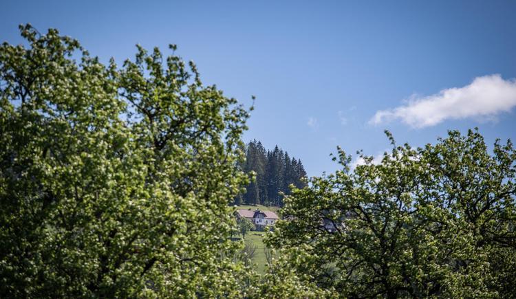 DSC02555web (© Redtenbacher)