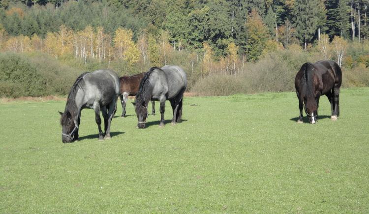 Moorwiese (© Ferienregion Attersee-Salzkammergut)