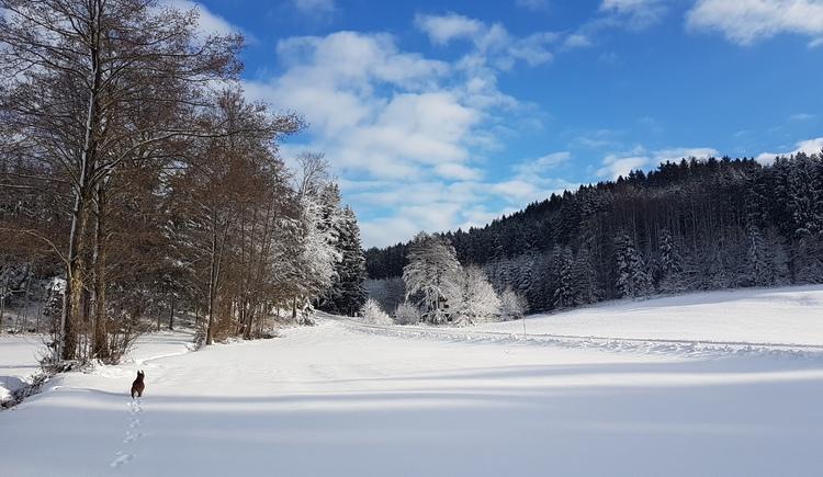 Ferienwohnung Wald Kobel in Lohnsburg. (© Ferienwohnung Wald Kobel)