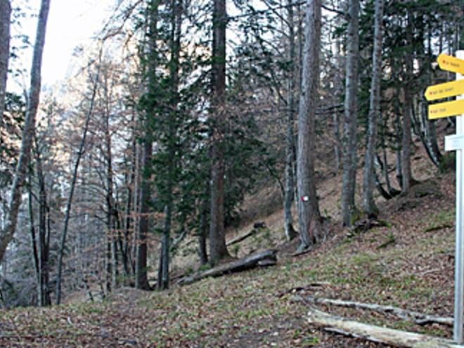 Bärenpfadsattel (© Wolfgangsee Tourismus)