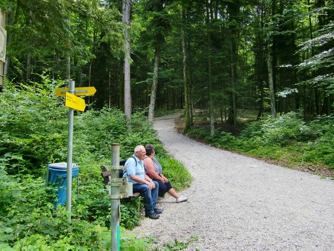 Kreuzung im Wald (© WTG)