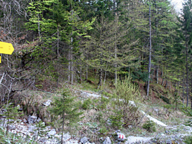 Bärenpfad 05 (© Wolfgangsee Tourismus)