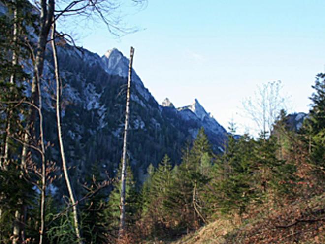Steig (© Wolfgangsee Tourismus)